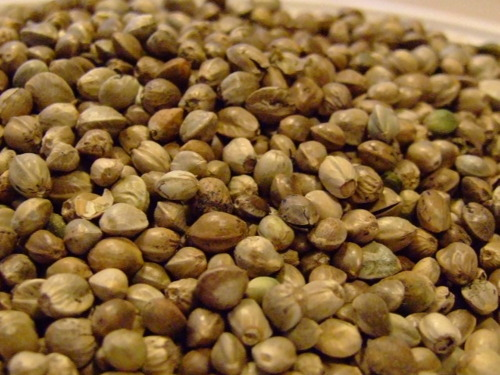 Hemp Seed Close Up
