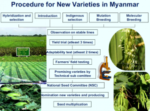 Procedure to Introduce New Seed Varities into Myanmar