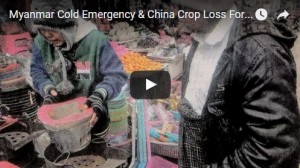 Myanmar Cold Emergency & China Crop Loss Forecast