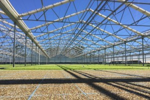 Farmers move crops to greenhouses global cooling