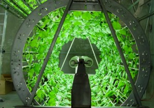 Omega Garden Intelligent Hydroponics