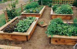 raised bed gardening_